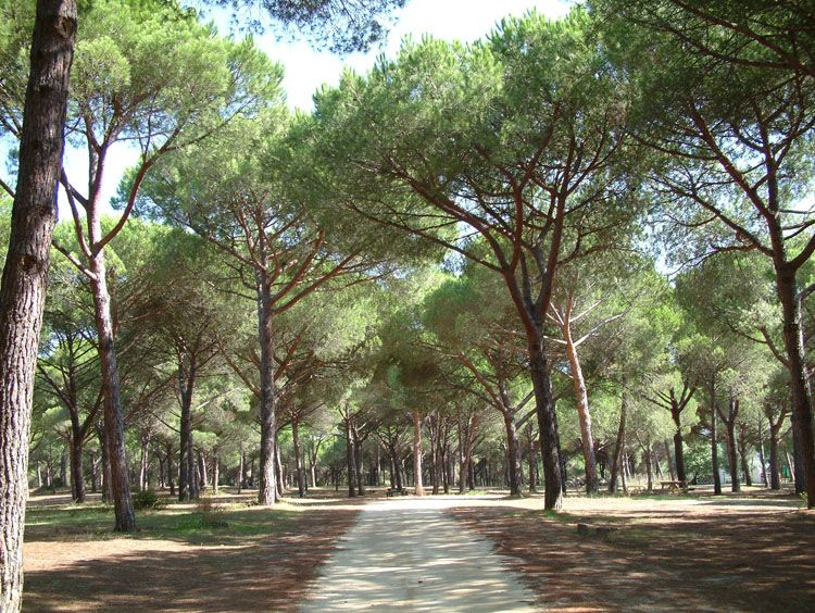 bosques naturales calentamiento global